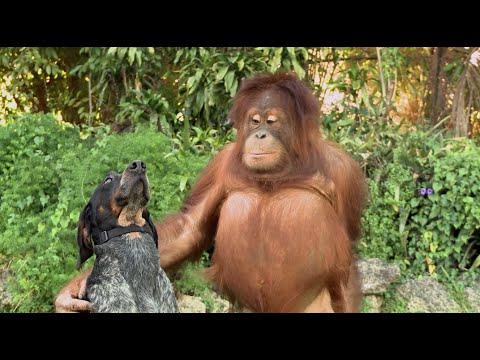 La amistad entre animales de distintas especies