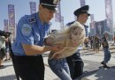 Euro 2012: protesta Femen a Kyiv prima della finale